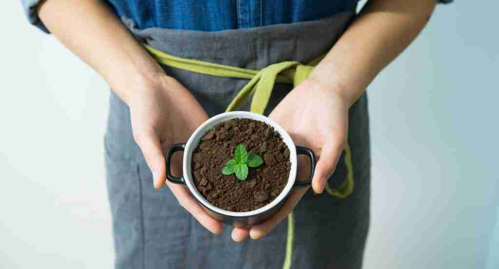 One of the uses for coffee grounds is to grow plants