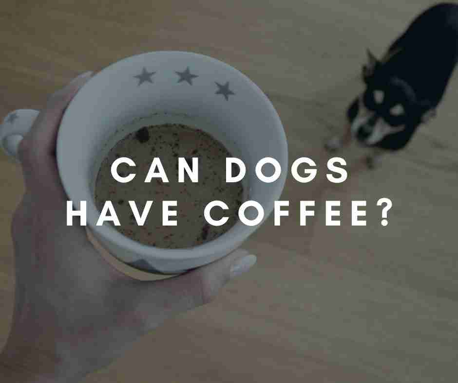 Pet & Caffeine Safety: Can Dogs Have Coffee?